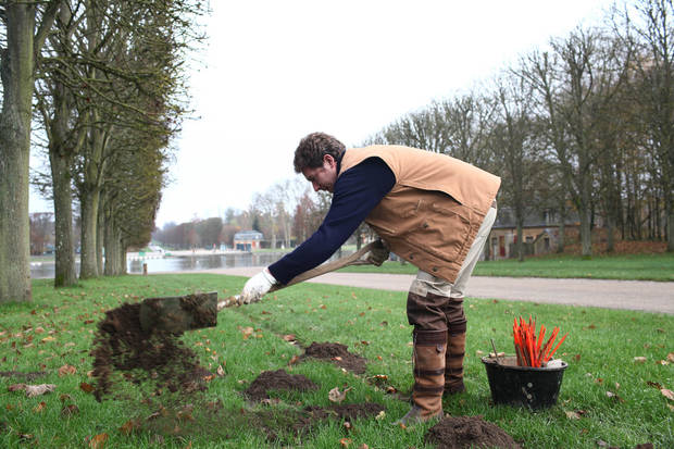 Molecatcher Jerome Dormion uses a shovel in the park of the Chateau de Versailles, west of Paris, Thursday, Nov. 22, 2012. The king is dead, but the molecatcher lives on. He even signs SMS messages: �Molecatcher to the king.� It�s been over two centuries since Louis XVI was guillotined on Paris� Place de la Concorde, but the job of hunting the underground rodent that so troubled French monarchs on the grounds of the Versailles palace still exists. (AP Photo/Thibault Camus)