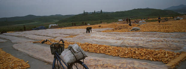 In this Sept. 12, 2012 photo, ears of field corn lay in piles along a roadside during the autumn corn harvest on a farm on the edge of Kaesong, North Korea. It was a tough year for North Korea's farmers, who grappled with an extended dry spell in the spring, followed by heavy rains from a series of summer storms and typhoon. (AP Photo/David Guttenfelder)