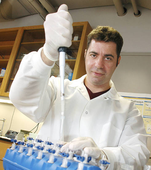 Roberto Pezza, Ph.D., is studying how chromosomes are separated during the formation of gametes and how errors in the recombination of DNA that occurs during the process can lead to birth defects.  <strong></strong>