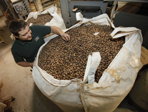 Josh Grundmann inspects a sack of native pecans at Valley View Pecan Co.  Photo by David McDaniel, The Oklahoman