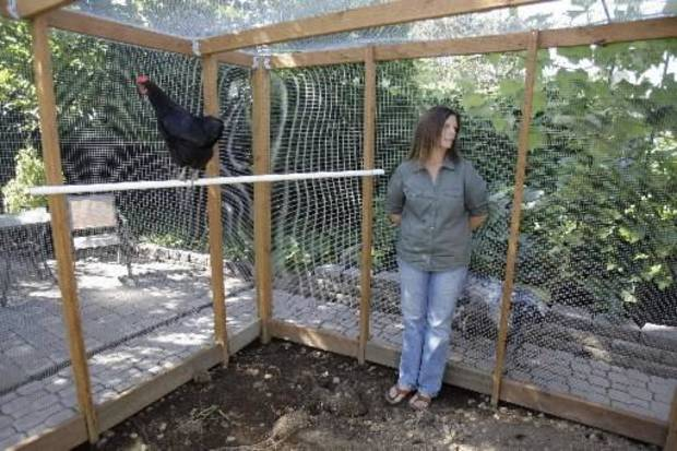 Aug. 21, 2009  - Barbara Palermo looking on while making remarks in her  chicken coop in  Salem, Ore. Palermo has led the local fight for the right to raise  chickens in her backyard. (AP Photo/Rick Bowmer)
