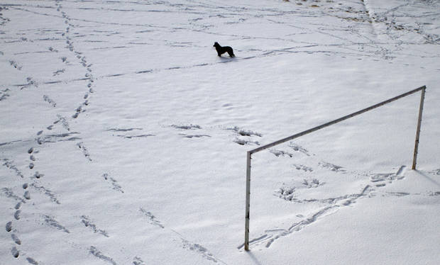 A dog stands in a sports field covered with fresh snow at the Tibetan Children's Village in Dharmsala, India, Saturday, Jan. 19, 2013. This was the first snowfall of the season in the town. (AP Photo/ Ashwini Bhatia)