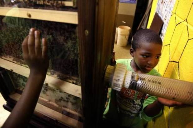 Da'Ron Reeves, 6, inspects the bee exhibit at Martin Park Nature Center in OKlahoma City this June.