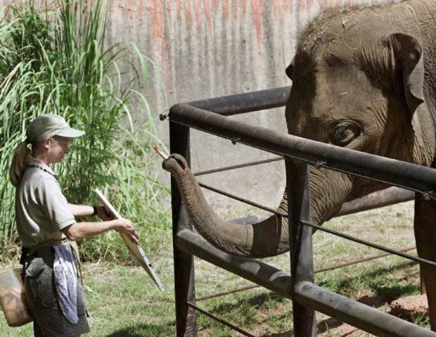 Asha paints with one of her Oklahoma City Zoo keepers in 2002. The elephants create works of art made with animal-friendly paint as a way to stimulate their minds. <strong>STEVE GOOCH - THE OKLAHOMAN ARCHIVE</strong>