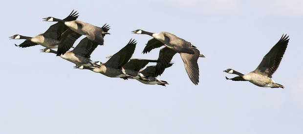 The Washita National Wildlife Refuge offers some of the best goose hunting in the state.