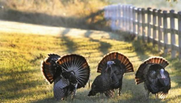 Oklahoma's spring turkey season opens Monday, but youth hunters get the first shot at gobblers on Saturday.