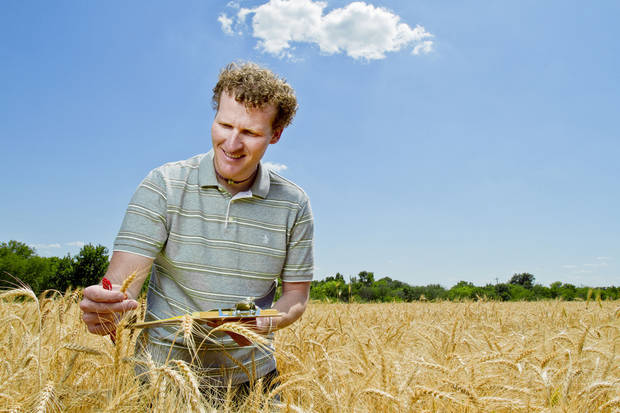 Mark Newell examines wheat as part of his small grains breeding research. Newell, who is only the fifth person to lead the small grains breeding program in 60 years, joined The Samuel Roberts Noble Foundation earlier this year.  <strong> - Provided</strong>