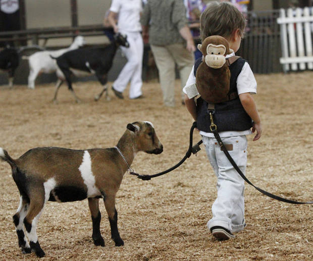 Emmy,  a Nigerian Dwarf goat, trails behind Paul Goodchild, 4, of Norman,   after he finished showing her in the three to six month-old  class during goat judging at the Oklahoma State Fair on Wednesday, Sep. 19, 2012. This is Goodchild's first time to show an animal at the state fair. Emmy won a second place ribbon; Paul was awarded a first place ribbon for showmanship.  Photo by Jim Beckel, The Oklahoman.