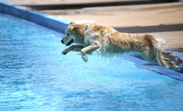 Maggie owned by Mike Sarsycki jumps into the pool during the Dog Pool Party at Westwood Water Park, Sunday, Aug. 30, 2009, in Norman, Okla. Photo by Sarah Phipps,The Oklahoman