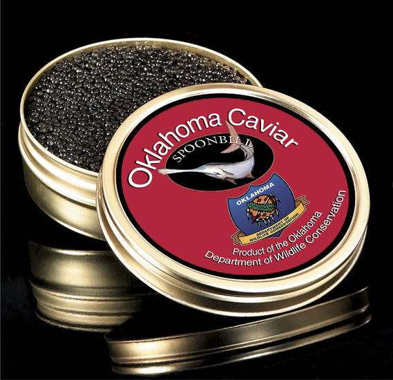 PHOTO ILLUSTRATION / PADDLEFISH / SPOONBILL / EGGS: Oklahoma Caviar BY STEVE BOALDIN, THE OKLAHOMA GRAPHICS