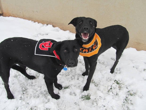 Sassy and Ariel are 1-year-old Labrador mixes. They are housebroken, and they like dogs and kids. Their Oklahoma City Animal Shelter numbers are 108812 and 108811. The �Furever Love� adoption event continues through Monday. The adoption fee for dogs and cats � including puppies and kittens � is only $25. The fee includes spay or neuter, shots and health check. The shelter is at 2811 SE 29. For more information, go online to www.okc.petfinder.com or www.okc.gov. PHOTO PROVIDED
