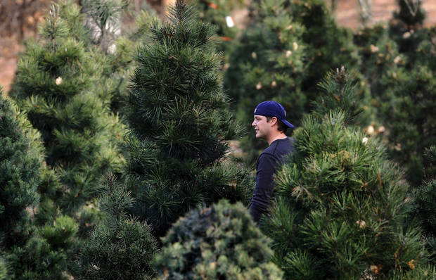 Chad Barnes, Oklahoma City,  walks through rows of trees. He was with his wife, Joy, and their son, Evan, 3 and daughter, Adelyn, 17 months,   searching for the right Christmas tree at Sorghum Mill Christmas Tree Farm on N Midwest Boulevard, north of Coffee Creek.   Photo taken Thursday, Dec. 6, 2012.  Photo by Jim Beckel, The Oklahoman &lt;strong&gt;&lt;/strong&gt;