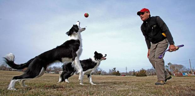 Lester Seat exercises his two border collies, Scout, 3, and Kitt, 18 months, as they take advantage of sun and moderate temperatures at Andrews Park on Wednesday, Jan. 18, 2012, in Norman, Okla.  Photo by Steve Sisney, The Oklahoman