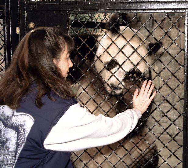 This photo released by the Smithsonian Institution shows keeper Laurie Perry training Tian Tian, a panda at the Smithsonian National Zoological Park in Washington, D.C.AP Photo