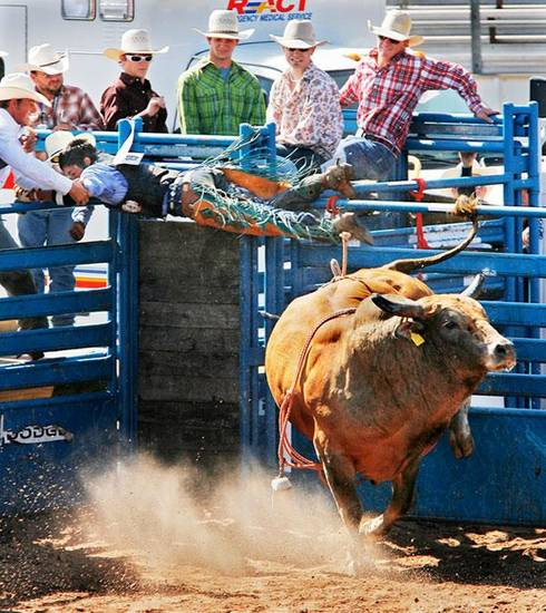 Landon Parrish, from Kayenta, AZ, holds on the shoot rail as the bull he was trying to ride gets out of the gate early at the  International Finals Youth Rodeo in Shawnee, Wednesday,  July 15 , 2009.  Photo By David McDaniel, The Oklahoman.