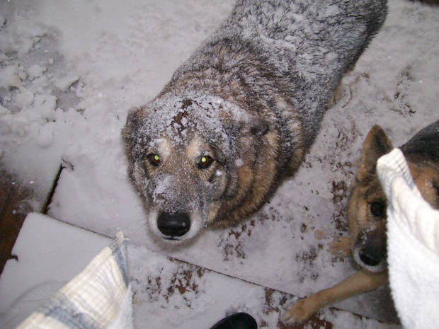 Took these 2 a couple of hours ago. my mutts want in the house bad :)  Submitted by Phil Washburn.