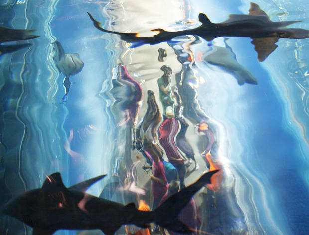 Above: Sharks circle over people in a clear tunnel during feeding time at the Oklahoma Aquarium in Jenks.