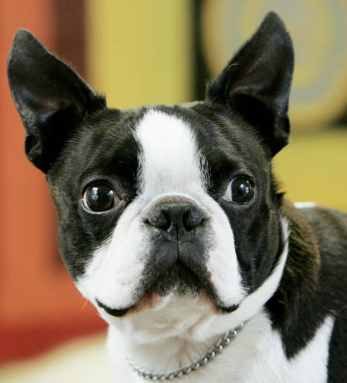 Ken Raymond has now lost a Boston terrier-sized amount of weight. FILE PHOTO BY JACONNA AGUIRRE, THE OKLAHOMAN