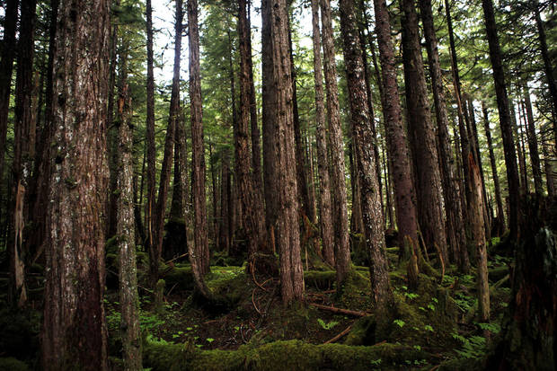 The forest is pictured on the Lake Eva Trail in Southeast Alaska, Friday, June 8, 2012.  Photo by Sarah Phipps, The Oklahoman