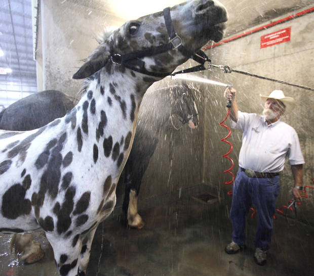 Doug Sauter washes a Leopard Mule he has on display at the Oklahoma State Fair, Tuesday, September 18, 2012. Photo By David McDaniel/The Oklahoman