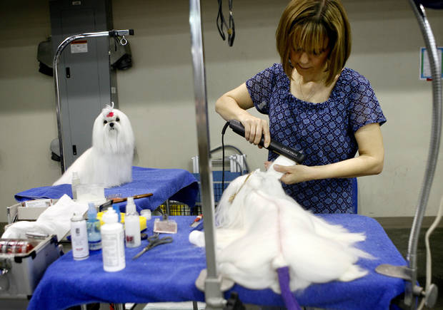 Tammy Simon of Collsville, Okla. straightens her maltese's fur during the Oklahoma City Dog Show at the Cox Convention Center in Oklahoma City Thursday, June 25, 2009.  Photo by Ashley McKee, The Oklahoman