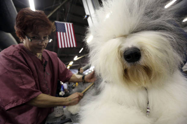 Caroll Geiser, of Rochester, N.Y., grooms Eva, a 3-year-old Old English Sheep dog, during the 137th Westminster Kennel Club dog show, Monday, Feb. 11, 2013, in New York. (AP Photo/Mary Altaffer) ORG XMIT: NYMA110