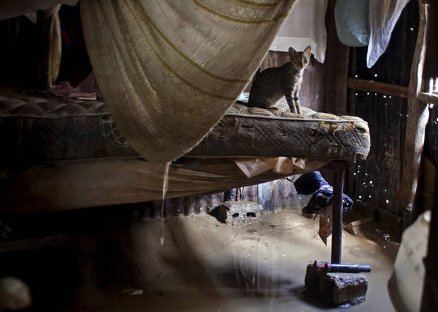 A cat sits on a bed a flooded house after the passing of Tropical Storm Isaac in Port-au-Prince, Haiti, Sunday Aug. 26, 2012. The death toll in Haiti from Tropical Storm Isaac has climbed to seven after an initial report of four deaths, the Haitian government said Sunday. (AP Photo/Dieu Nalio Chery) ORG XMIT: PAP125