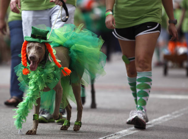A dog walks in the St. Patrick's Day Parade in Oklahoma City, Saturday, March 17, 2012. Photo by Sarah Phipps, The Oklahoman.
