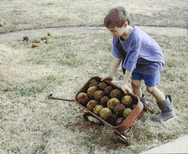 Mikey Bucci collects bois d�arc apples on his grandparents� farm in Checotah. Photo provided.