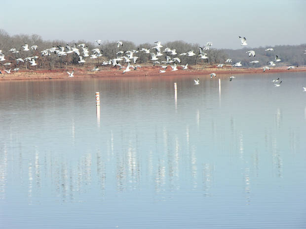 Gulls take flight across the water at Lake Thunderbird State Park. PHOTOS PROVIDED