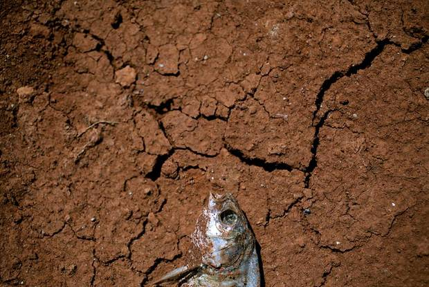 A fish lies dead in the sun after water receeded from Lake Hefner in Oklahoma City on Monday, Aug. 1, 2011. Photo by John Clanton, The Oklahoman