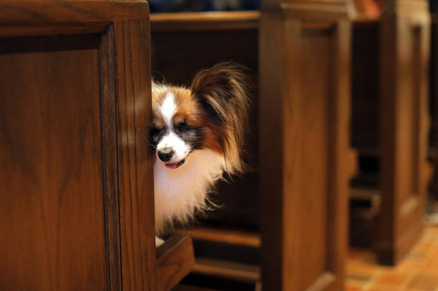 Diego owned by Karen Meites  peaks around a pew during a service in Celebration of God's Creations with the Blessing of the Animals at St. Augustine of Canterbury Episcopal Church in Oklahoma City. Sunday, Oct. 7, 2012. Photo by Sarah Phipps, The Oklahoman