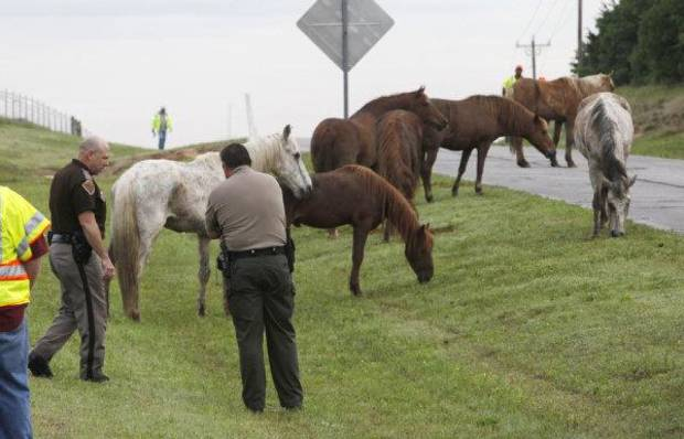Oklahoma Highway Patrol and ODOT workers keep a number of horses together near 122nd and Sooner Rd. after a horse trailor turned over at the I-35 entrance to the Turner Turnpike in Oklahoma City, OK, Tuesday, May 18, 2010. By Paul Hellstern, The Oklahoman ORG XMIT: KOD
