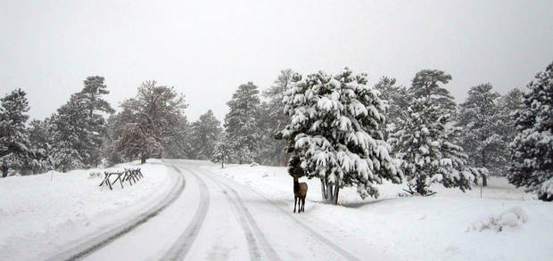 This image provided by the Rocky Mountain National Park, Colorado shows an elk standing inside the park Wednesday Oct. 26, 2011. A snowstorm moved in to the area on Tuesday night, dumping 12 to 16 inches of snow. (AP Photo/Rocky Mountain National Park)                                  ORG XMIT: LA113