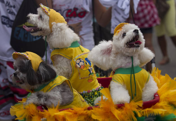 "Dogs wear Brazil's national soccer team jerseys during the ""Blocao"" dog carnival parade in Rio de Janeiro, Brazil, Sunday, Feb. 3, 2013. According to Rio's tourism office, Rio's street Carnival this year will consist of 492 block parties, attended by an estimated five million Carnival enthusiasts. (AP Photo/Silvia Izquierdo)"