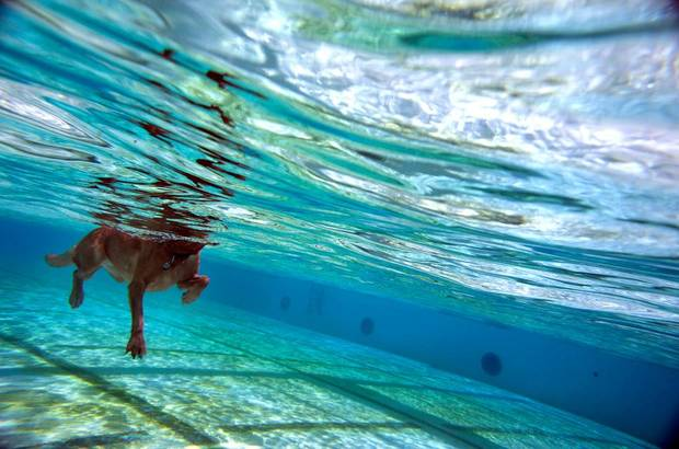 A dog swims during the Pooch Pool Party at the Westwood Water Park in Norman, Okla., Sunday, Sept. 2, 2012. Photo by Sarah Phipps, The Oklahoman