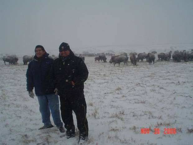 Cheyenne & Arapaho Tribes' Farm and Ranch Supv. Francis Lonebear with the 260 head heard in Concho, Ok.<br/><b>Community Photo By:</b> Candice Lonebear<br/><b>Submitted By:</b> Candice, El Reno