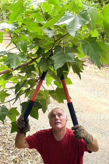 "There are better ways to prune a tree than ""topping"" it, which can stress the tree and cause damage. PHOTO PROVIDED. <strong></strong>"