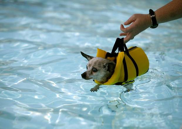 DOGS / SWIMMING POOL PARTY / WATER:  Phoebe, a Chihuahua, is lowered into the water by her owner Leslie Kilgore, of Norman during the annual Pooch Pool Party at Westwood Waterpark in Norman on Sunday, September 4, 2011. Photo by John Clanton, The Oklahoman ORG XMIT: KOD