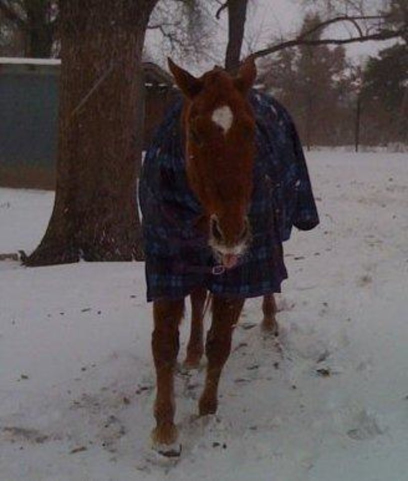 Photo - CHOCTAW -- Wink says brrrr