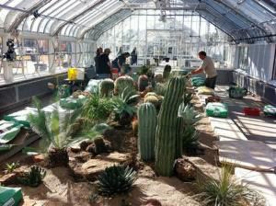 Photo - The desert landscape display with cacti is ready at the newly refurbished Ed Lycan Conservatory at Will Rogers Garden. Members of the Oklahoma Cacti and Succulent Society volunteered their time to help city crews set it up. The conservatory at the park opens Wednesday afternoon to the public  STAFF WRITER - BY ROBERT MEDLEY