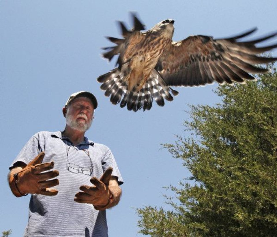 Tom Sanders releases a recovered Mississippi Kites at WildCare on Thursday, August 25, 2011, in Noble, Okla. Photo by Steve Sisney, The Oklahoman ORG XMIT: KOD