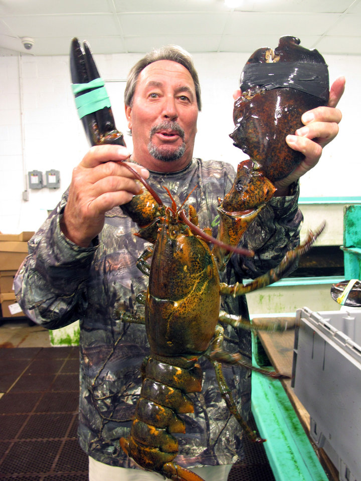 Photo - In this July 15, 2014 photo, Greg Goff holds one of the largest lobsters he has at his Plesasantville N.J. store that sells them to Atlantic City casinos. With three casinos threatening to close by September, small businesses like Goff's will feel the pain, in addition to nearly 8,000 casino workers set to lose their jobs. (AP Photo/Wayne Parry)