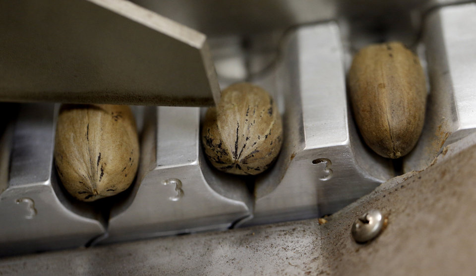 Pecans are lined up in a cracking machine at Mason's Pecans & Peanuts. PHOTO BY STEVE SISNEY, THE OKLAHOMAN <strong>STEVE SISNEY</strong>