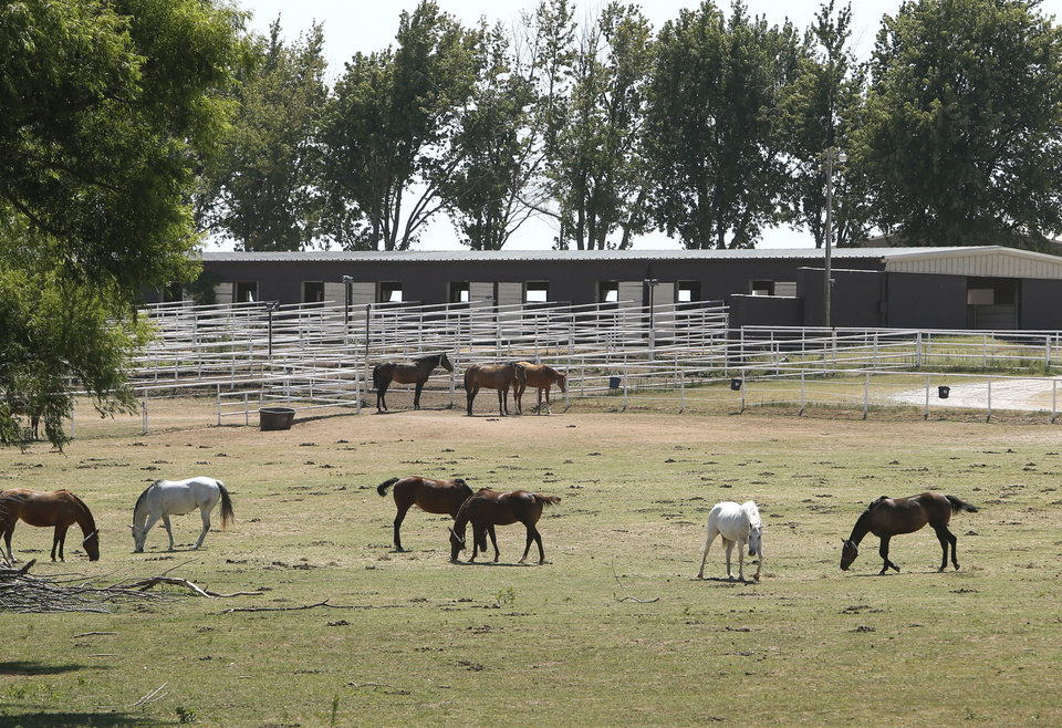 Horses graze Friday at Zule Farms, a Lexington ranch whose owners are accused of ties to a Mexican drug cartel. The horses are costing the federal government to feed care for, but officials say there are just too many. The crowding has lead to many injuries and illnesses. Photo by Steve Sisney, The Oklahoman <strong>STEVE SISNEY</strong>