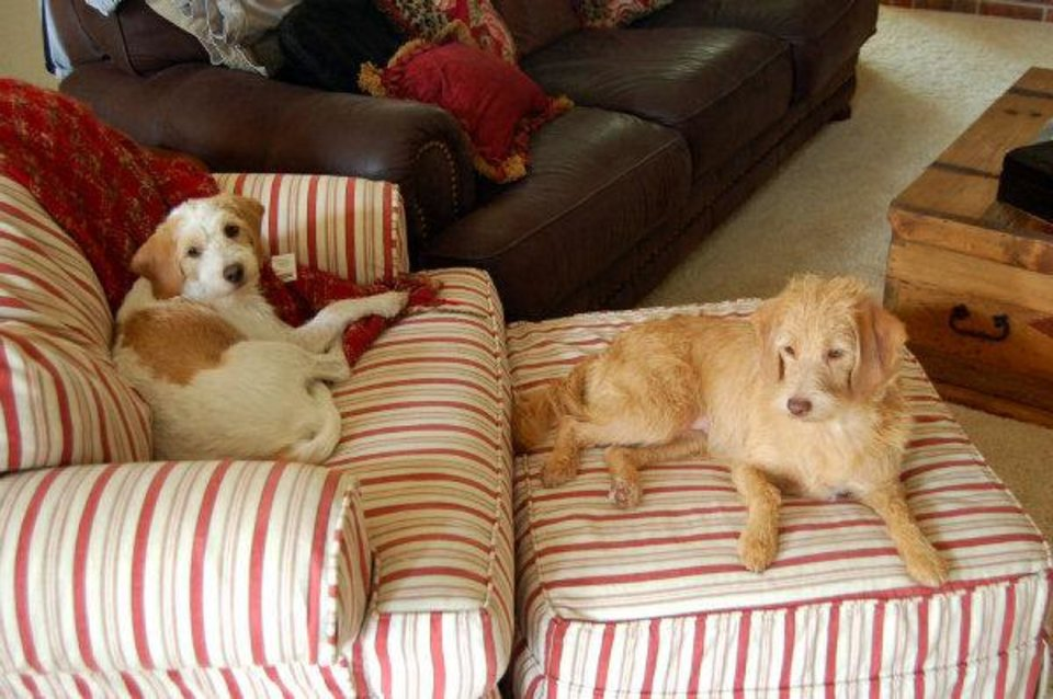 Photo - Gracie, left, and her sister Sophie lounge on a living room chair. Photo provided