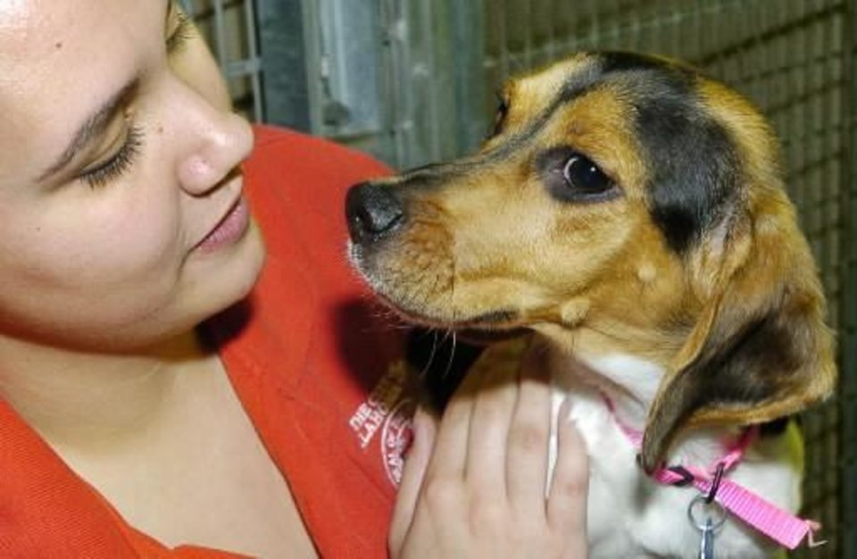 2005 file photo - Animal welfare worker June Colon plays with Lucy, a female adult Beagle mix, one of many dogs and cats available for adoption at the Oklahoma City Animal Shelter. Staff photo by Jim Beckel
