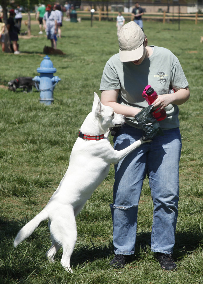 Photo - Phoenix jumps up on her owner Jessie Stewart looking for a treat during the first Hound Hunt, an Easter Egg hunt for dogs inside the dog park at Bickham-Rudkin Park in Edmond Sunday April 1, 2012. The eggs are filled with dog treats. Photo by Doug Hoke, The Oklahoman