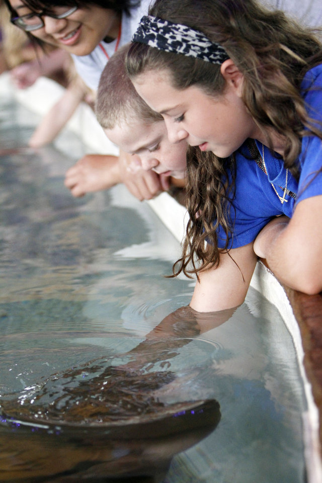 CHILD / CHILDREN / KIDS: Carly Watkins (13) of Dewitt, Arkansas feeds a hungry sting ray at the Oklahoma City Zoo's newest Sting Ray Bay exhibit, on Tuesday, July 16, 2013. Photo by Aliki Dyer/ The Oklahoman