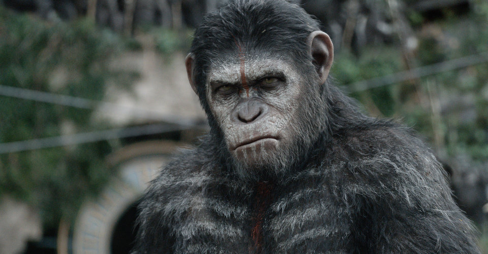 """Photo -  Andy Serkis stars as Caesar in a scene from """"Dawn of the Planet of the Apes."""" AP Photo    -"""